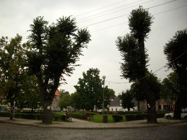Plac Wolności - dużo zieleni