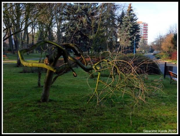 Lubin - park Wyżykowskiego 2