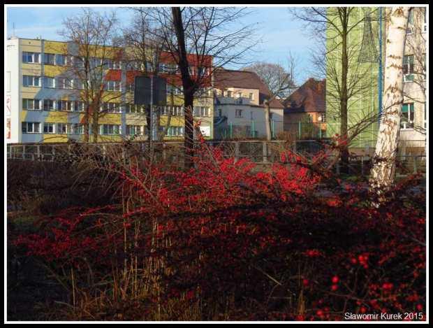 Lubin - park Wyżykowskiego 3