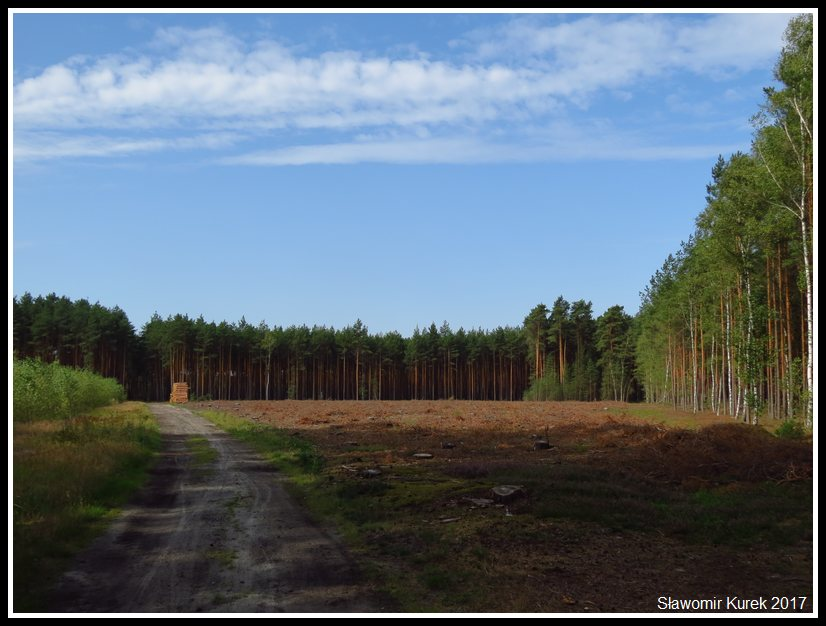 Okolice Nowogrodu Bobrzańskiego 1