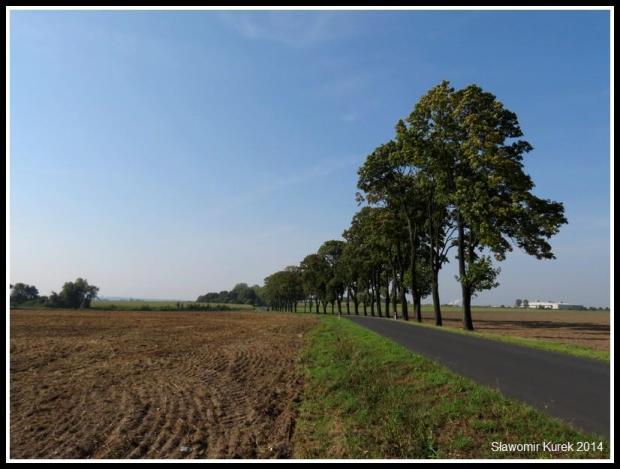 Droga Żary - Lubomyśl 1