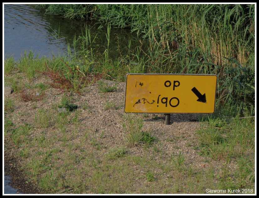 Żagań - znak na rzece 2